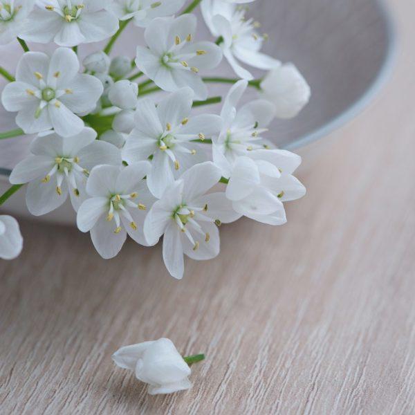 flower-1307354_1920-1
