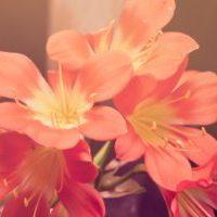 flower-jpeg